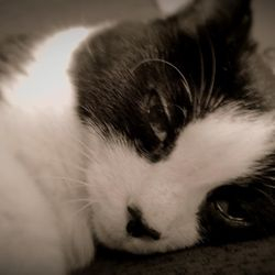 Little Love Pet Sitters Mitsi