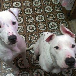 Little Love Pet Sitters Jenna and Hanna
