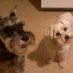Little Love Pet Sitters Jake Casey and Hunter