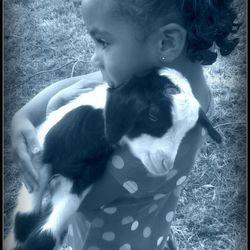 Little girl cuddling baby goat.