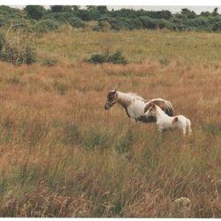 Horses at Gortmore