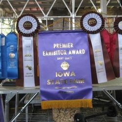 10 goats at Iowa State Fair