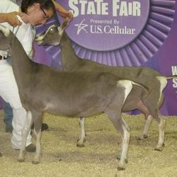 2012- WI State Fair with full sister Agent