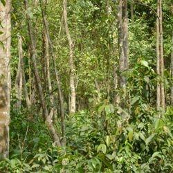 Agar plantation @ Coxs Bazar