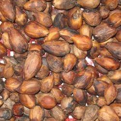 Seeds of Gmelina arborea