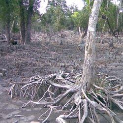 Erosion in the Sundarbans