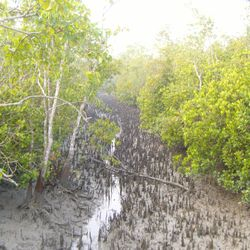 Canal system in the Sundarbans