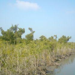 Sundarbans forest