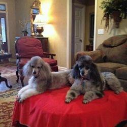 Baxter & Oliver, AL