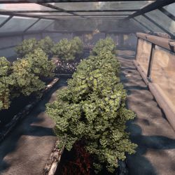 Interior shot of Eden's Greenhouse.