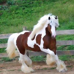 Horse Running In Pasture