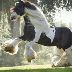 Amazing Horse In Field