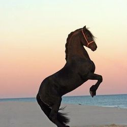Stallion On The Beach