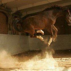 Horse Jumping High