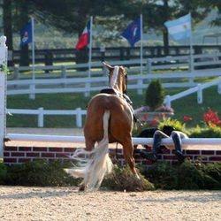 Rider Falls as Horse Stops