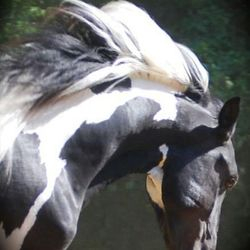 Black and Wjite Horse