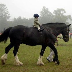 Small Child On Horse