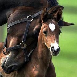 Horse Nuzzling Her Filly