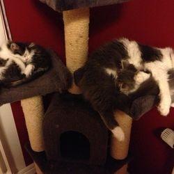 Så här trött blir man efter att ha busat på hela undervåningen + trappan! För att inte tala om Mamma som måste ha koll på var alla tar vägen! 2013-01-20