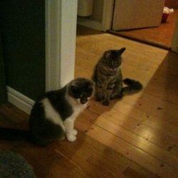 My och Mymlan, våra första katter