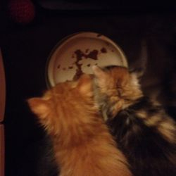 Morris och Cattis har börjat äta vanlig mat