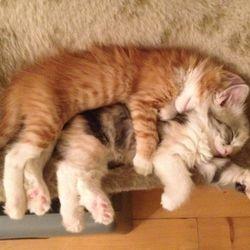 Morris och Cattis sover sked