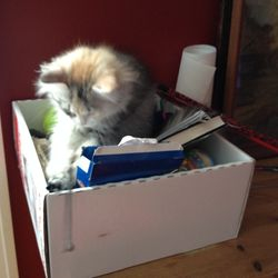 Cattis har hittat leksaks-lådan