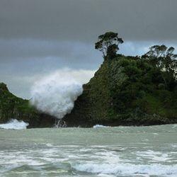 Punga Punga Island