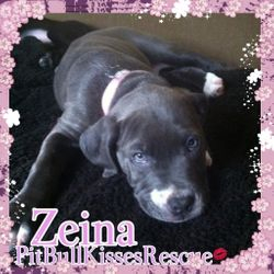 ADOPTED  Zeina is fully housetrained. She will be spayed next month. We are excepting applications now.