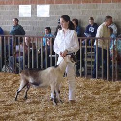 4-h district show