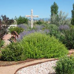 A beautiful community park brought to life out of the desert.