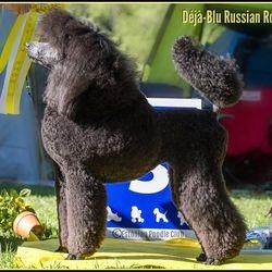 BIS 3rd junior, Estonian Poodle Club specialty
