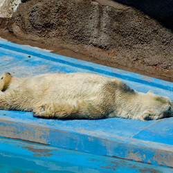 Arturo suffering in the Argentine heat.
