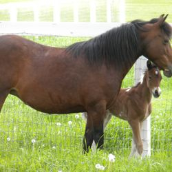 Liberty and her 2013 colt Misty's Dash for Freedom