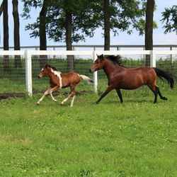 Liberty and her 2015 colt Hart's Dancing Jubilee