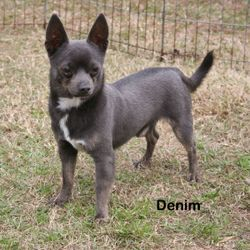 Denim, Blue Tri Male.