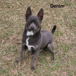 Denim, Blue Tri Male
