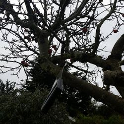 customer asked to cut tree down.