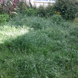 Grass before its cut.