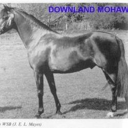 DOWNLAND MOHAWK