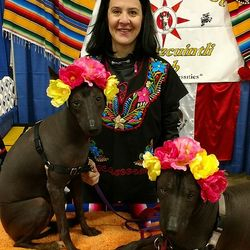 2017 Xoloitzcuintli Winner Peoples Choice Award
