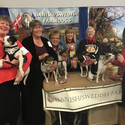 2018 Reserve Best Decorated Booth Awarded Danish Swedish Farmdog