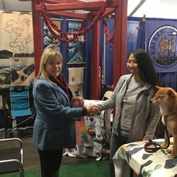 2018 Peoples Choice Awarded Shiba Inu