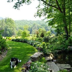 dog friendly sustainable landscape and garden