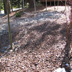 Before wood chip removal