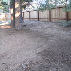 After pine needle removal