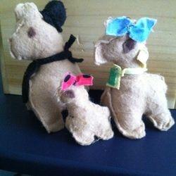 The Alpacas! Our newest friends!