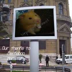 Breeding syrian hamsters requires great knowledge so please find responsible syrian breeders.