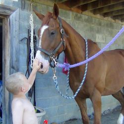 OTTBs and kids do mix with the right handling!