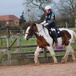 Polly and Puzzle as The Best Horse For Sale